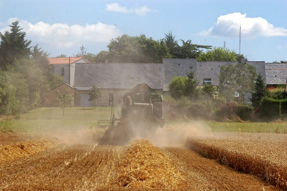 photoblog image Wheat harvesting 2/5.